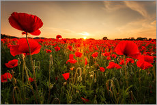 Gallery print  Poppy field with sunset - Oliver Henze
