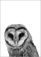Gallery Print  The owls are not what they seem - Finlay and Noa