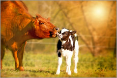 Wall sticker  Cow and calf in the pasture - Monika Leirich