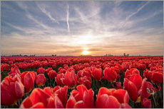 Wall sticker  Tulips sunset landscape - Remco Gielen
