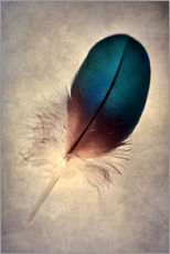 Gallery print  Blue parrot feather - Jaroslaw Blaminsky