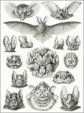 Wall sticker  Bats, heads and faces - Ernst Haeckel