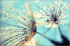 Wall sticker  Dandelion gold - Julia Delgado