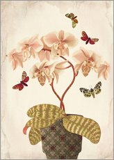 Gallery print  Orchid Portrait - Mandy Reinmuth