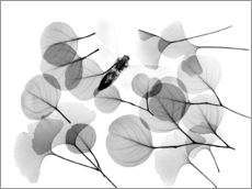 Gallery Print  Ginkgo and bee