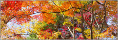 Wall sticker Colorful forest in autumn as Panorama