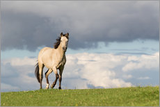 Gallery print  Horse in the summer in the meadow - Monika Leirich