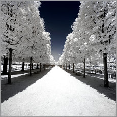 Gallery Print  Another Look - White alley - Philippe HUGONNARD