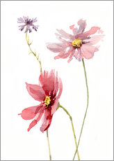 Gallery print  Cosmos flower and cornflower - Verbrugge Watercolor