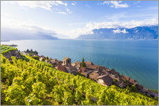 Wall sticker  St. Saphorin in the Lavaux region - Dieterich Fotografie