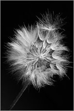 Wall Stickers Dandelion on black background