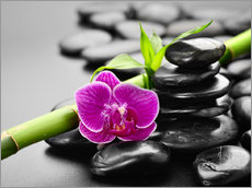 Gallery print  Basalt stones, bamboo and orchid