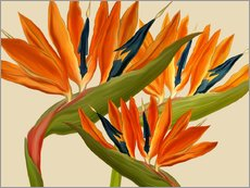 Wall sticker Strelitzia