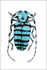 Wall Stickers Beetle