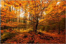 Gallery print  Gold leaf - autumn forest - Oliver Henze