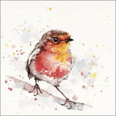 Wall Stickers  Adventure Awaits (Robin Red Breast) - Sillier Than Sally