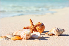 Gallery print  Starfish and shells