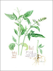 Gallery print  Herbs & Spices collection: Basil - Verbrugge Watercolor