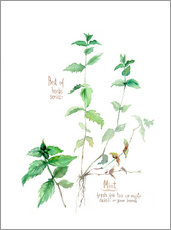 Wall sticker Herbs & Spices collection: Mint