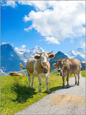 Gallery print  Cows on the pasture
