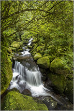 Gallery print  Forest stream with waterfall - Thomas Klinder