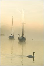 Gallery Print  A misty morning over Lake Windermere, UK - Ashley Cooper