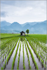 Gallery Print  Small hut in the middle of Padi field in Sumatra, Indonesia, Southeast Asia - John Alexander