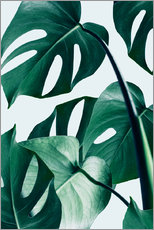 Wall sticker  Monstera - Uma 83 Oranges