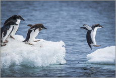 Wall sticker  Adelie penguins between two ice floes - Nick Dale