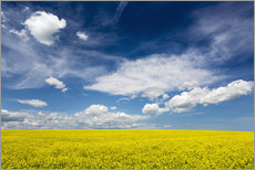Wall sticker  Flowering canola field - Michael Interisano