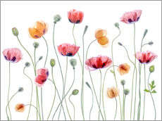 Gallery print  Poppy party - Mandy Disher