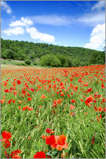 Wall sticker  Poppy fields near Covarrubias - Alex Robinson