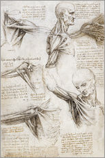 Wall sticker  Muscles and tendons of the shoulder and upper limb - Leonardo da Vinci