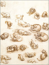 Gallery print  Study of a dog and a cat - Leonardo da Vinci