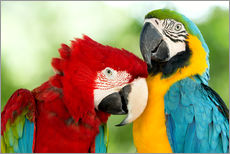Wall Stickers  cuddling macaws