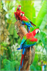 Wall sticker  Group of Dark Red Macaws