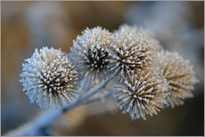 Gallery print  The big burdock in winter - Bernhard Kaiser