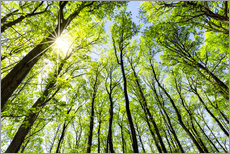 Wall sticker Green forest in spring in the sunlight