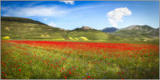 Gallery print  Poppies at Piano Grande, Italy - Frank Fischbach