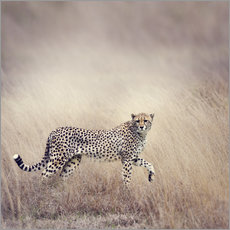Wall Stickers  Cheetah on the hunt