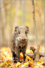 Gallery print  Small boar