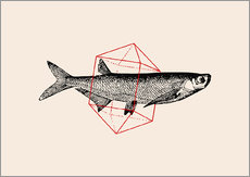 Gallery print  Fish In Geometrics II - Florent Bodart