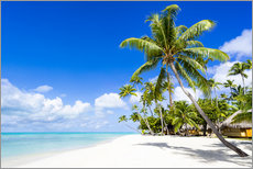 Jan Christopher Becke - Palm beach in the South Pacific with white sand and blue sea
