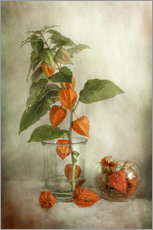 Wall sticker  Still life with Physalis - Mandy Disher