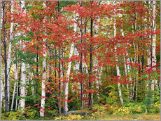 Wall Stickers  Autumnal deciduous forest - Thonig
