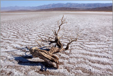 Gallery print  Death Valley National Park, Vereinigte Staaten, Tal des Todes - Catharina Lux