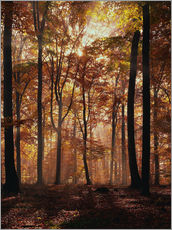 Wall sticker  Light incidence in the autumn beech forest - Thonig