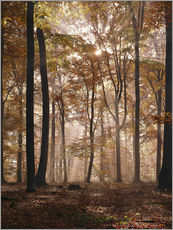 Wall sticker  Light incident and forest floor in the beech forest - Thonig