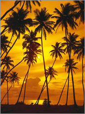 Gallery print  Palm trees in the sunset - Thonig