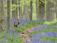 Wall Stickers  Deer in a beech forest - Andreas Keil
